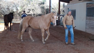 Christi Rains' Liberty and Horseanality Clinic