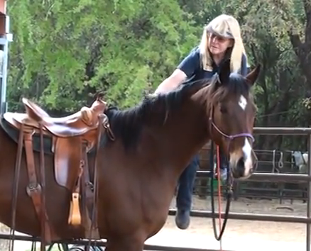Teach your horse to pick you up from the fence - www.christirains.com
